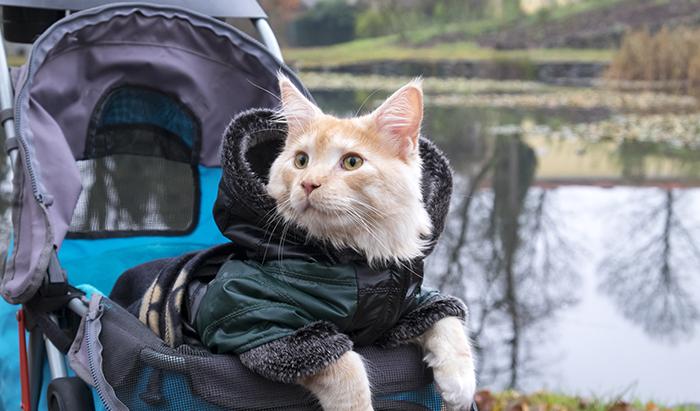 best cat stroller