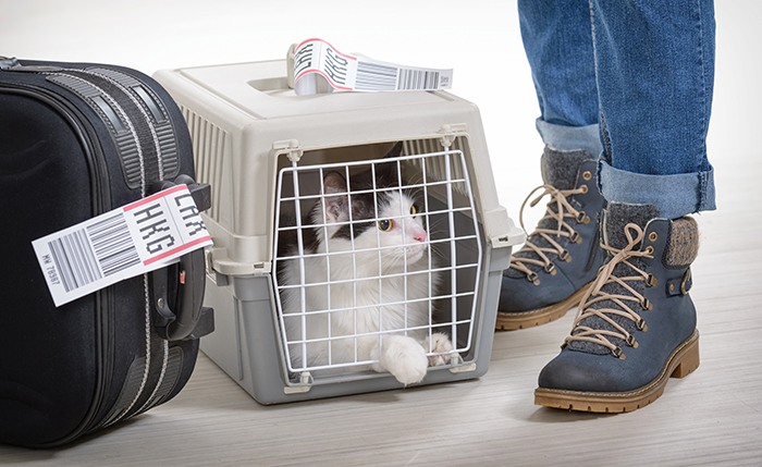cat carrier on a plane