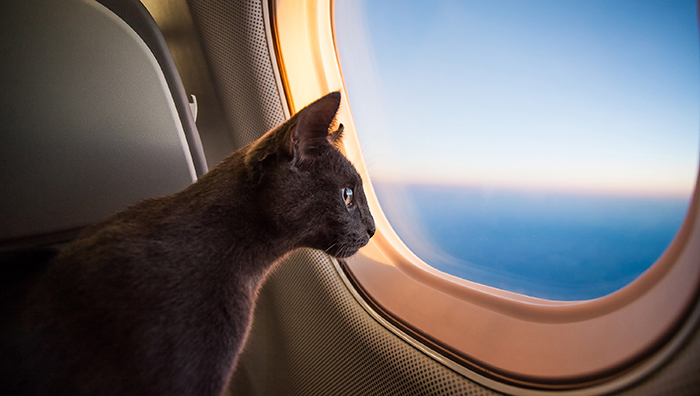 cat friendly airline