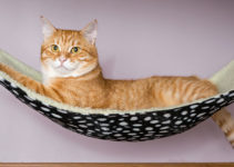 best cat travel hammocks