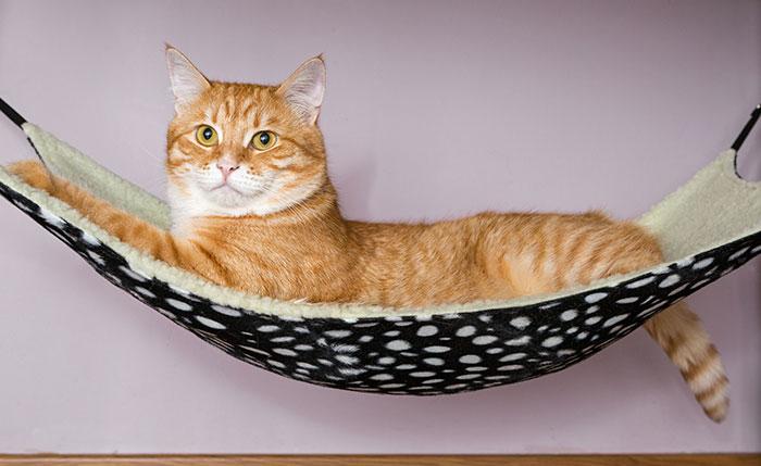 best cat travel hammocks