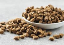 best cat dry food