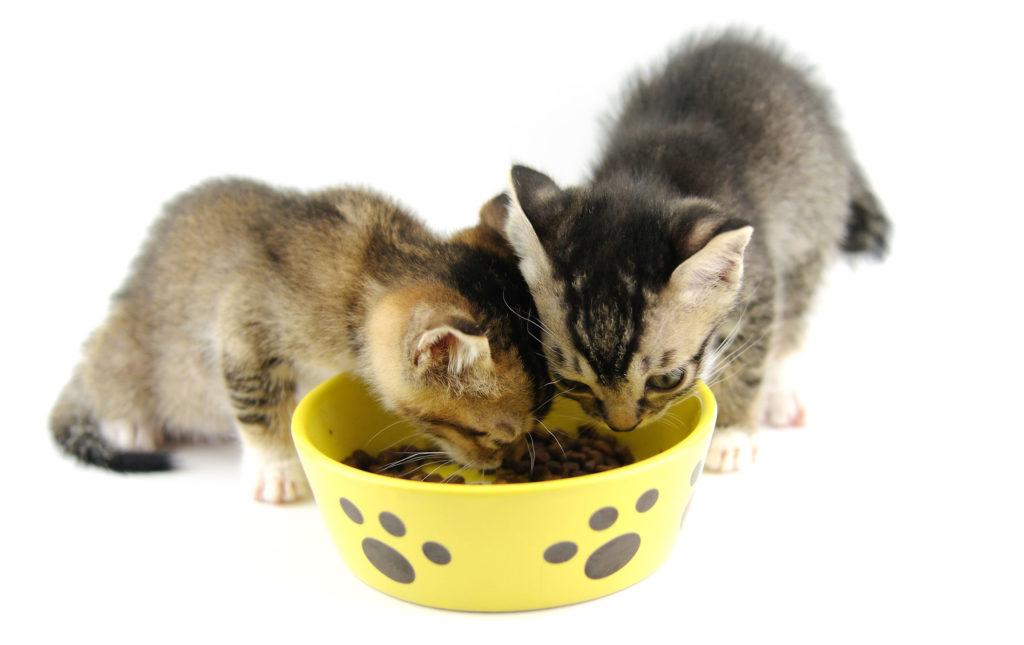 best cat food for kittens