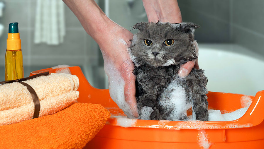 best cat shampoo for fleas