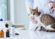 best flea and tick treatments for cats