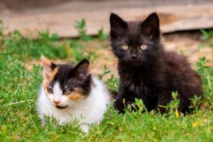 kittens on green grass