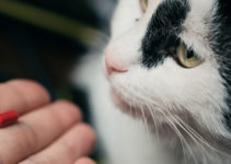 best cat vitamins and supplements