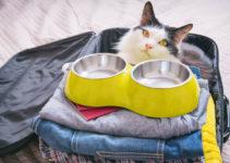 best cat travel bowl