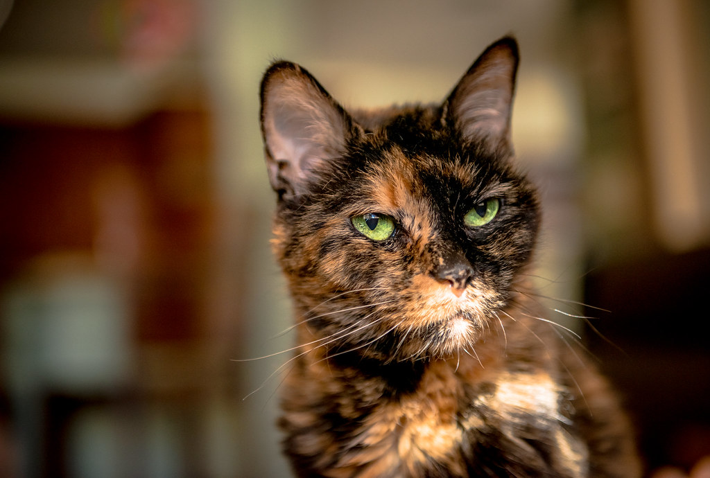 How To Travel With An Elderly Cat Cat Travel Guide