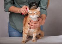 Best Cat Grooming Brush