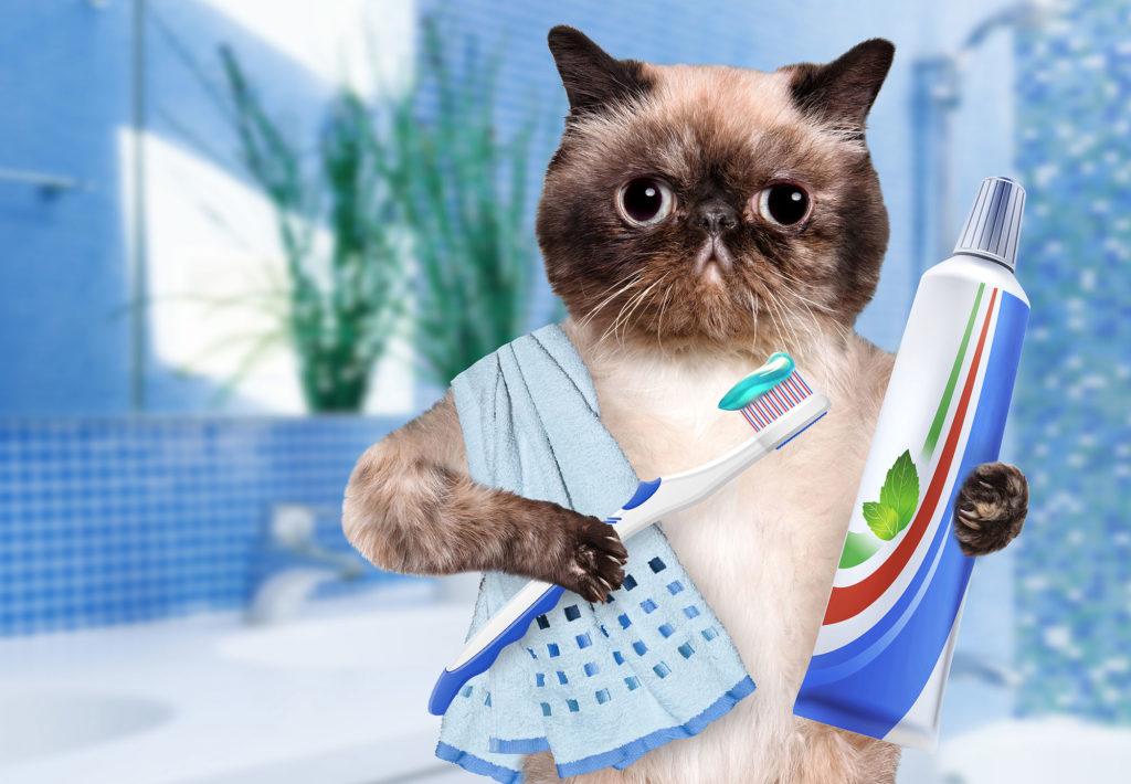 best cat toothpaste