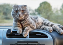 how to travel with a cat in a car