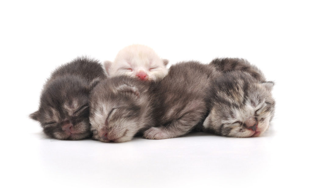 how to travel with newborn kittens